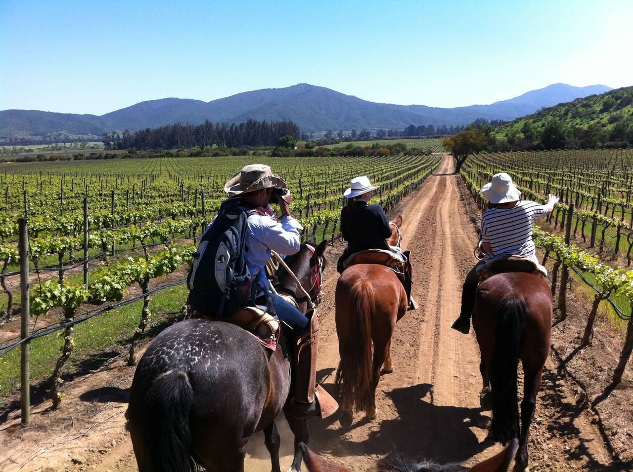 Horseback riding among the vineyard